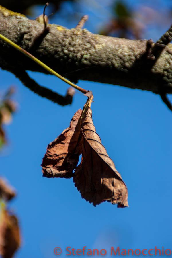 autunno-a-roma-14-of-14