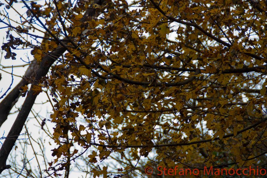 autunno-nelle-rovine-1-of-19