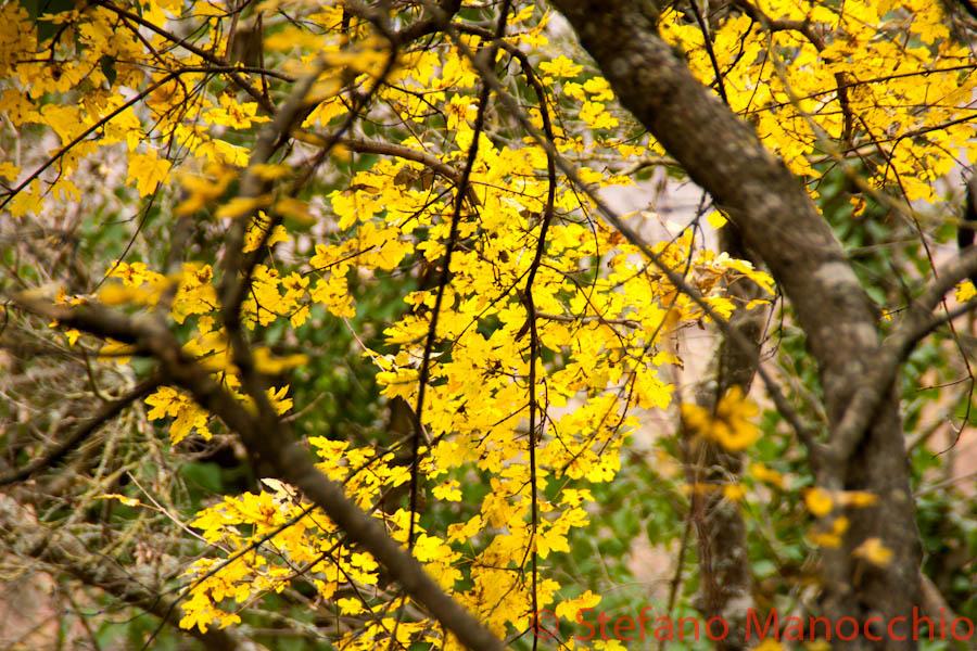 autunno-nelle-rovine-12-of-19