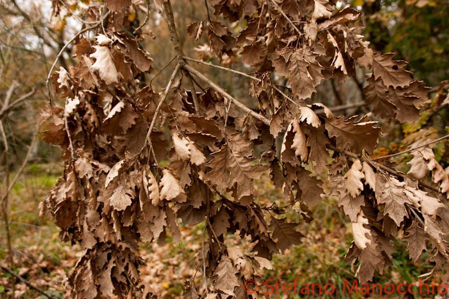 autunno-nelle-rovine-2-of-19