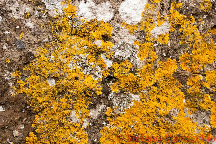 autunno-nelle-rovine-8-of-19