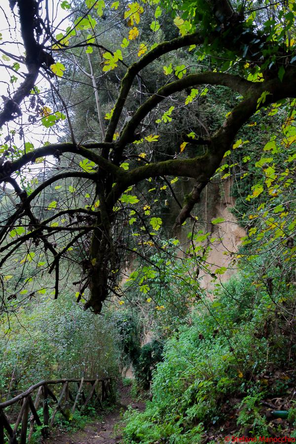 Parco del Treja (9 of 79)