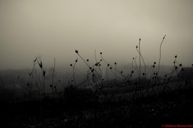 Nella nebbia (6 of 9)