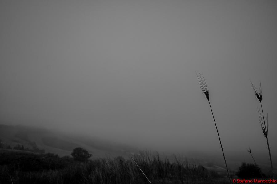 Nella nebbia (7 of 9)