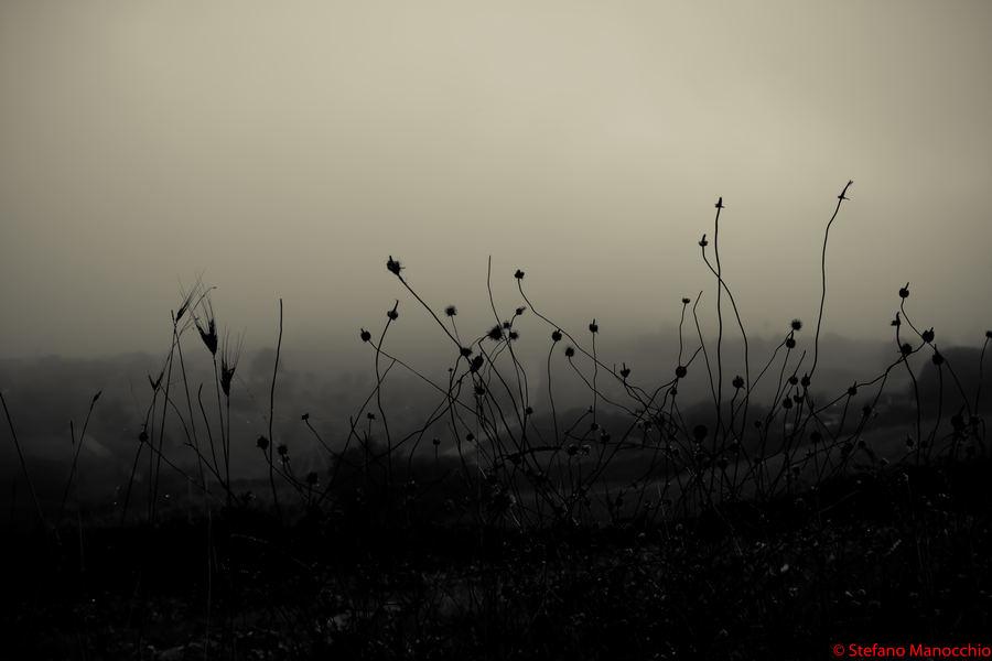 2014-09-10-Nella nebbia (6 of 9)