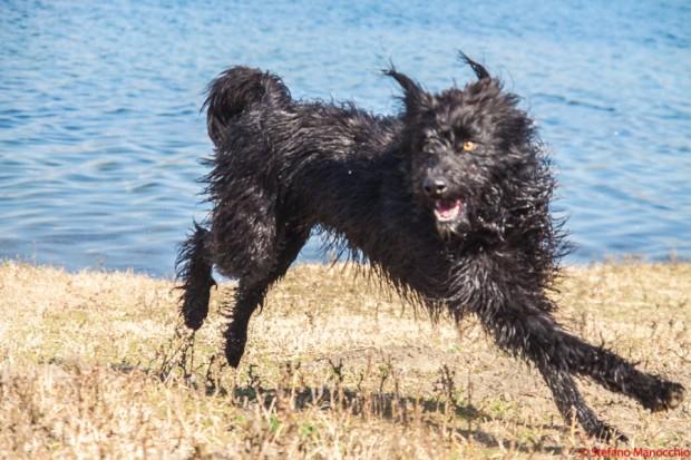 Un weekend da cani (65 di 136)