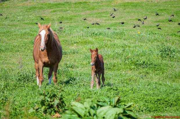 cavalli e cani (20 di 64)