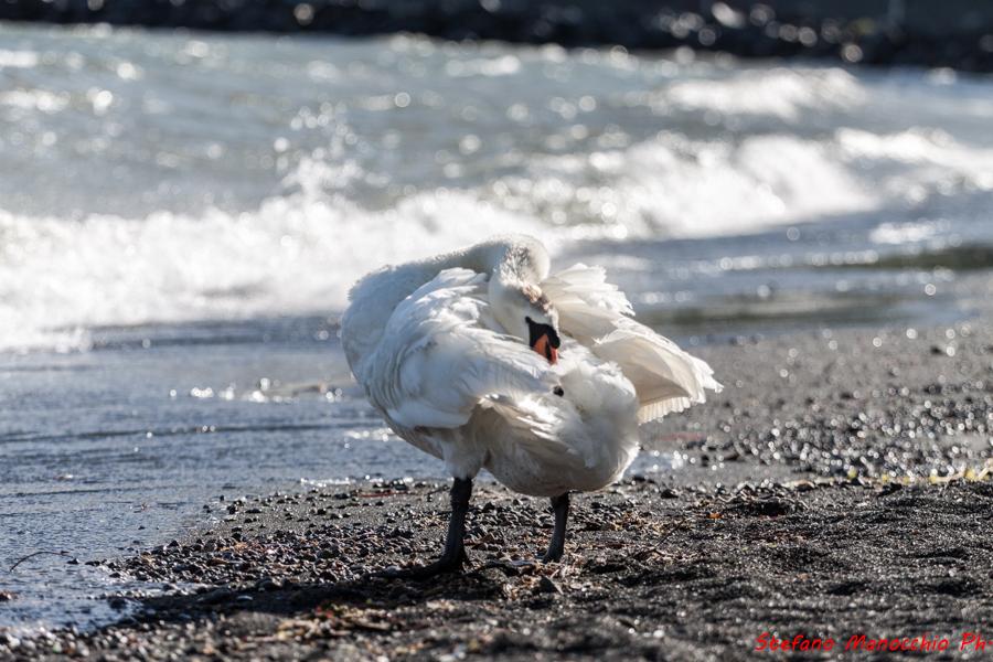 Vento sul lago (10 of 33)