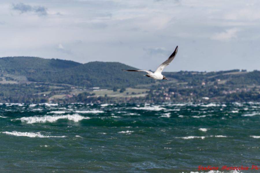 Vento sul lago (12 of 33)